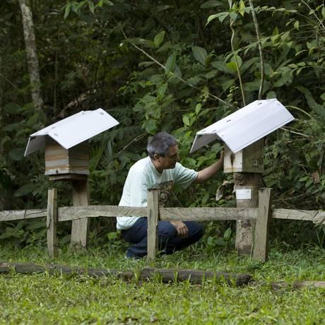 Luiz Alberto Medina é o responsáveis pelo meliponário na Floresta da Tijuca Foto: Guilherme Leporace/Agência O Globo