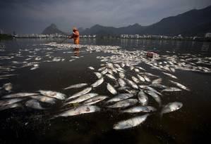 Trabalho sem fim: gari retira savelhas mortas da Lagoa Rodrigo de Freitas Foto: Márcia Foletto / Agência O Globo