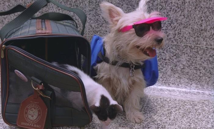 21/12/1999 - Camilla Maia - JF - Bichos saem de férias, produtos para animais viajarem. Rio , RJ, 27167, 27168 - 1999122113300506 Foto: Camilla Maia / Agência O Globo