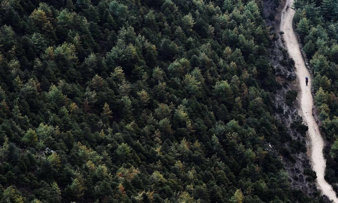Carregador nepalês cercado por floresta de pinheiros. Esses profissionais carregam equipamentos de em média 30 kg em elevações que chegam a 5 mil metros ROBERTO SCHMIDT / AFP
