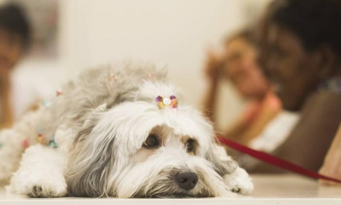 Cachorro com coleira Foto: Alexandro Auler / Agência O Globo