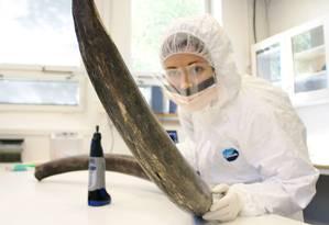 Eleftheria Palkopoulou inspeciona presa de mamute no Museu Sueco de História Natural, em Estocolmo Foto: Love Dalen / AP