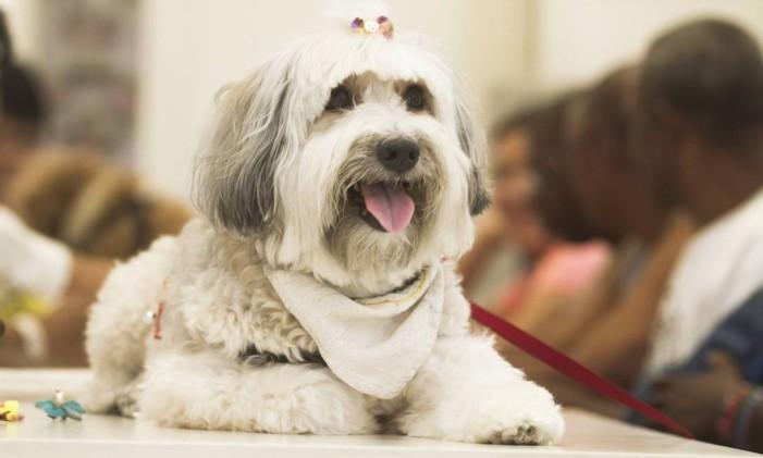 Cães Foto: Alexandro Auler / Agência O Globo