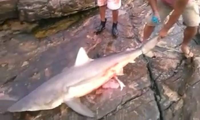 Pescador mostra o tubarão de 130 quilos que ficou agarrado em rede em Búzios Foto: Reprodução