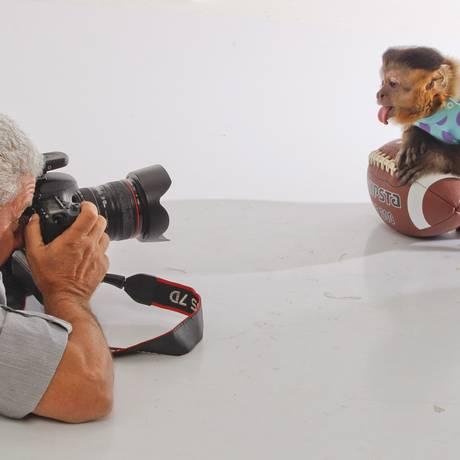 O macaco-prego pode participar de sessões de fotos Foto: Guilherme Leporace / Agência O Globo