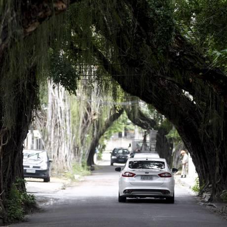 Avenida Thomás Edison Vieira, conhecida como Rua das Árvores, será Zona Especiaial de Proteção da Paisagem e do Ambiente Cultural (Zepac). Foto: Luiz Ackermann / Agência O Globo