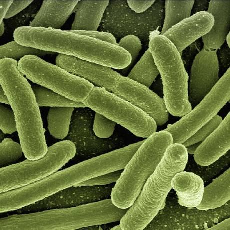 Cepas resistentes de bactérias estão se espalhando globalmente Foto: Reprodução/Pixabay