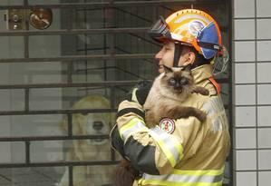 Bombeiro resgata gatinho de Renata Mesquita, moradora do 7º andar do edifício Canoas Foto: Gabriel de Paiva / Agência O Globo