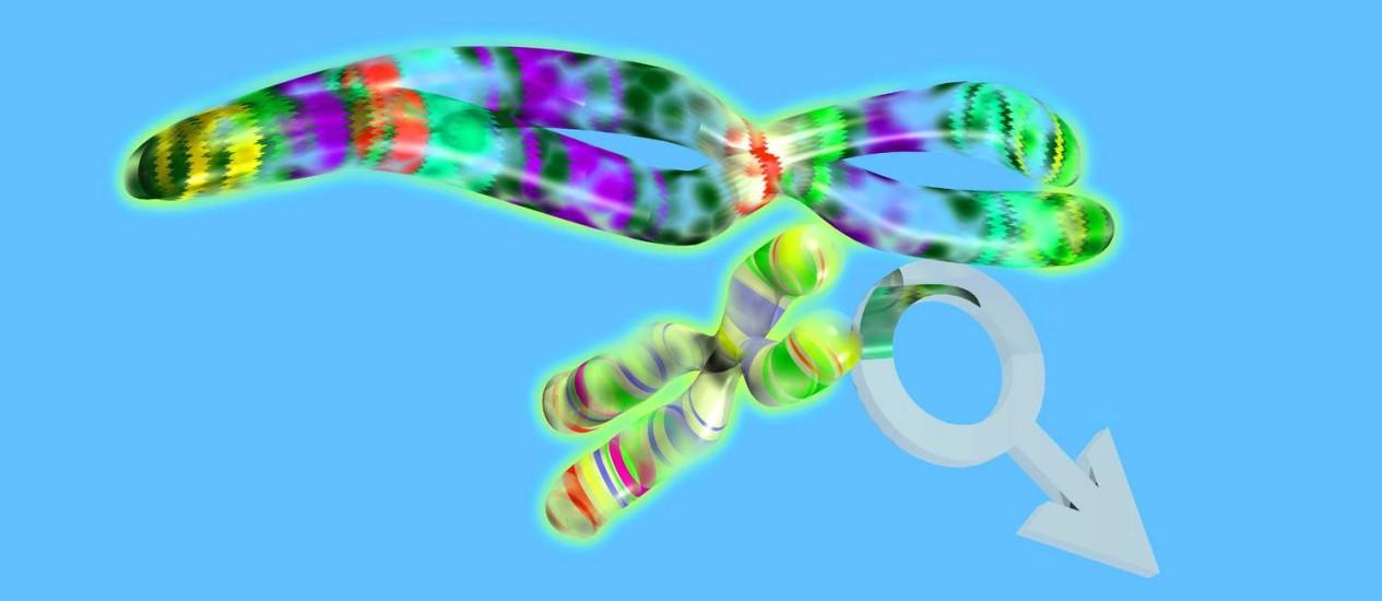 Ilustração de um cromossomo masculino (XY): disputa pela cópula ajuda a filtrar mutações prejudiciais Foto: Latinstock