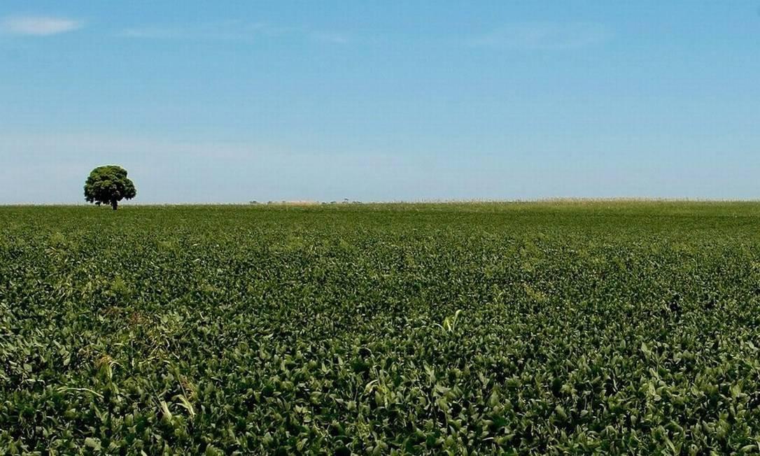 Levantamento mostra que 91,1% da soja cultivada no país usa organismos geneticamente modificados. No caso do milho, a taxa é de 81,5% Foto: / Pedro Kirilos/30/01/2011