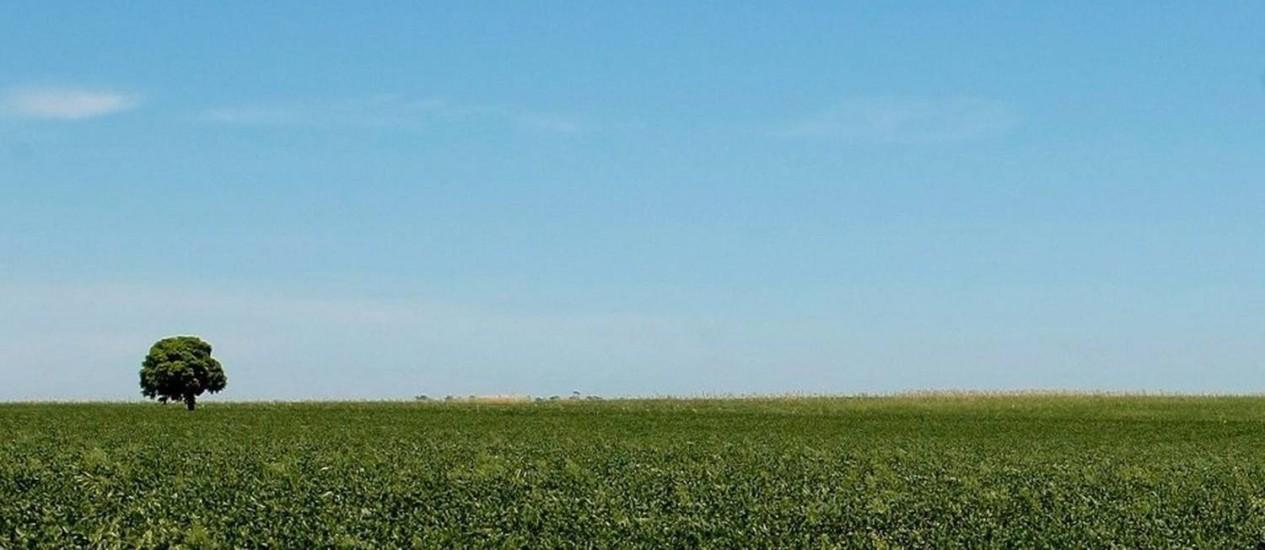 Levantamento mostra que 91,1% da soja cultivada no país usa organismos geneticamente modificados. No caso do milho, a taxa é de 81,5% Foto: Pedro Kirilos/30/01/2011