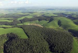 Remanescentes de Mata Atlântica no Nordeste: municípios na fronteira com Cerrado ainda preocupam Foto: Adriano Gambarini