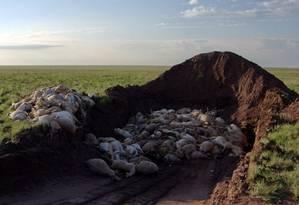 Mais de 120 mil antílopes saiga já morreram apenas neste mês Foto: SERGEI KHOMENKO / DIVULGAÇÃO/FAO