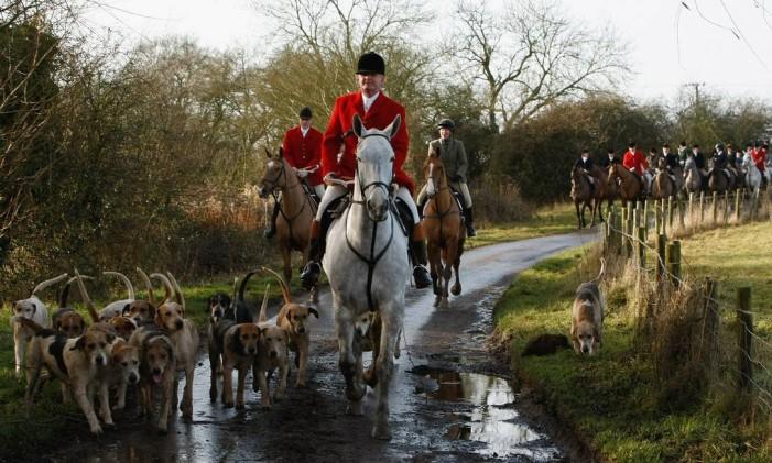 De roupas vermelhas e com vários cães acompanhando, a caça à raposa é tradição secular Foto: Reprodução