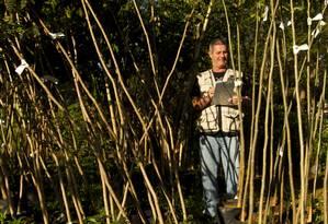 Supervisor de estudos ambientais estratégicos Sérgio Portes confere lote de mudas no Terra Altas Foto: Guilherme Leporace / Agência O Globo