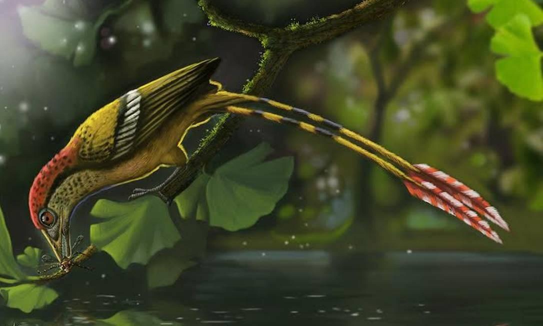 Ilustração da ave encontrada no Ceará: espécie viveu há 115 milhões de anos Foto: Divulgação/Deverson Pepi