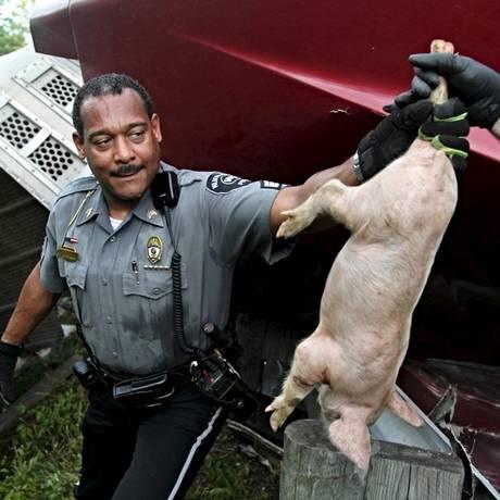 Agente da polícia local resgata animal após acidente em Ohio Foto: WHIO-TV/Jim Noelker / REUTERS