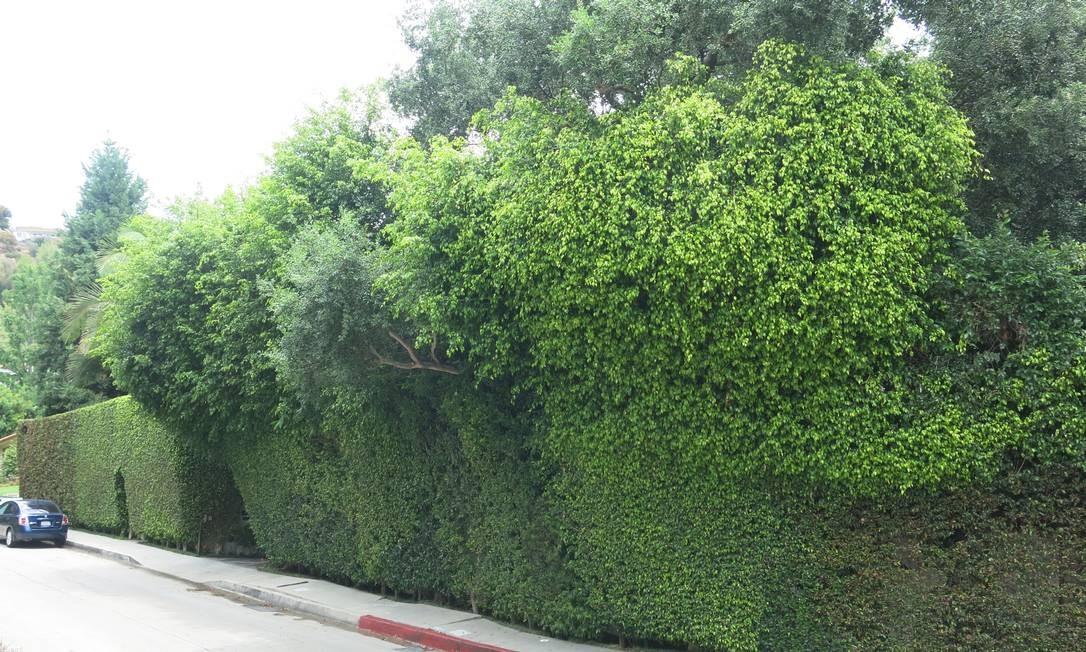 Mansão da atriz Charlize Theron é cercada por um extenso muro verde Foto: Bruno Rosa / Agência O GLOBO