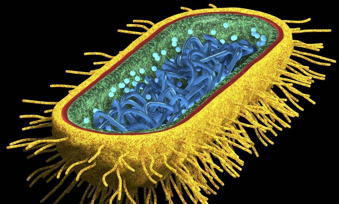 Modelo tridimensional de uma bactéria Escherichia coli: experimento pode permitir que micro-organismo seja usado para liberar remédios em horários precisos no corpo, quando seriam mais eficazes Foto: Latinstock