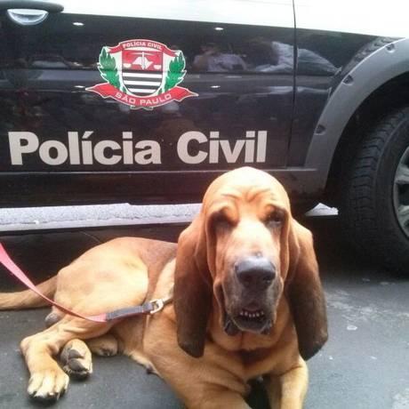Bruno, um cão da chamada Unidade K9, que ajuda a investogar crimes em São Paulo: ele recebeu até homenagem da Câmara de Vereadores Foto: Divulgação/ Agência O Globo