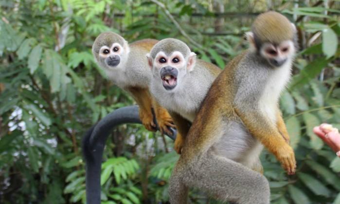 Macacos de cheiro: dentro da lancha, esperando comida - Léa Cristina ...
