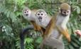 Macacos de cheiro: dentro da lancha, esperando comida