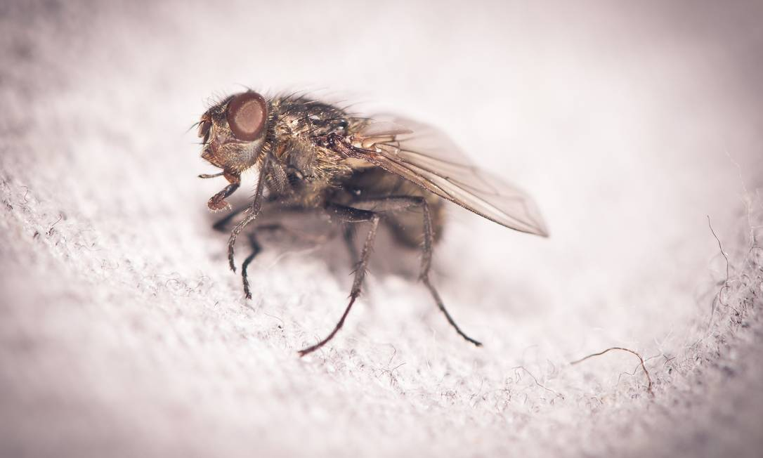 O segredo está nas moscas! Foto: / FreeImages