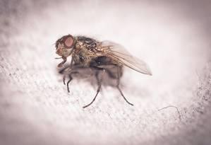 O segredo está nas moscas! Foto: FreeImages