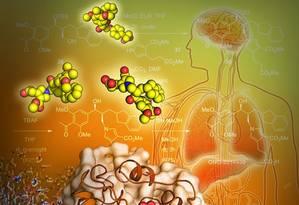 Nova pesquisa revela a estrutura 3D de um receptor para o LPA1, uma proteína implicada em várias doenças no cérebro Foto: Yekaterina Kadyshevskaya/USC