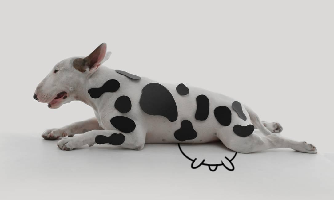 O bull terrier Jimmy Choo estrela uma coleção cápsula para a grife homônima e, em setembro, vai ganhar uma biografia ilustrada Rafael Mantesso / Divulgação