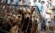 Cachorros ficam em gaiolas enquanto potenciais compradores os observam
