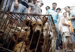 Cachorros ficam em gaiolas enquanto potenciais compradores os observam Foto: AP