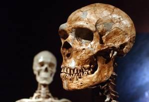 Esqueletos de um neandertal e um homem moderno em exibição no Museu de História Natural de Nova York Foto: AP/Frank Franklin II