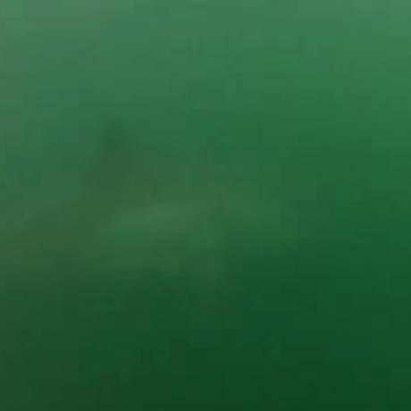 Tubarão branco é filmado enquanto rodeava surfista em praia australiana Foto: Reprodução internet