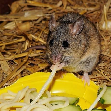 """Animais quando expostos a comidas que não podem obter tendem a """"sonhar"""" com estratégias para pegar os alimentos Foto: Reprodução Pixabay"""