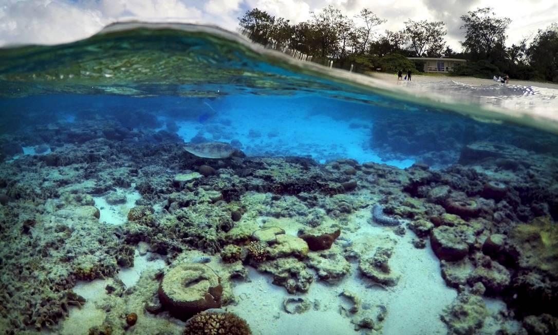 Turistas em frente às cabanas do Eco Resort da Ilha Lady Elliot, onde uma tartaruga cava à procura de comida nos corais DAVID GRAY / REUTERS