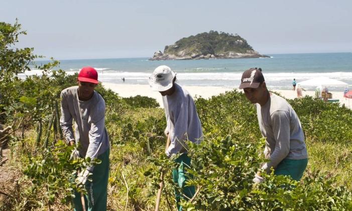 Funcionários trabalham no projeto de reflorestamento da vegetação original da restinga da orla da praia de Grumari Foto: Bia Guedes / Arquivo O Globo 09/10/2014