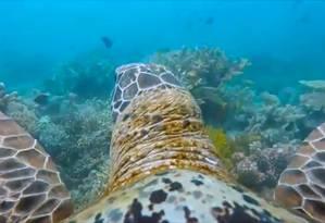 Imagem captada pela câmera colocada no casco da tartaruga Foto: Reprodução da web