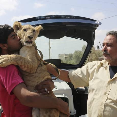 Ibrahim Al-Jamal, de 17 anos, abraça e beija Mona, na despedida do casal de leões Foto: Adel Hana / AP