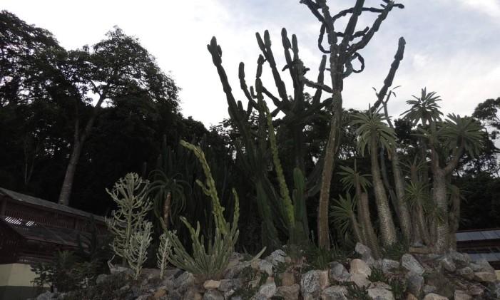 O canteiro dedicado a África, no Jardim Botânico Foto: Adélia Duarte