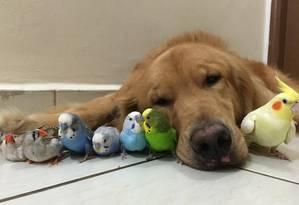Bob e seus amigos pássaros em uma das fotos compartilhadas pelas redes sociais Foto: Reprodução/Facebook