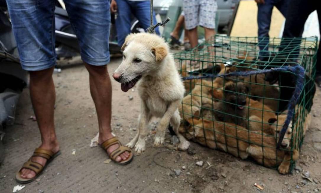Resultado de imagem para venezuela comendo cachorros