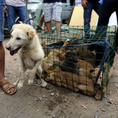 Questão cultural dos chineses despertou ira mundial Foto: Kim Kyung-Hoon / Reuters