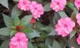 Flores na Agrícola da Ilha, em Joinville