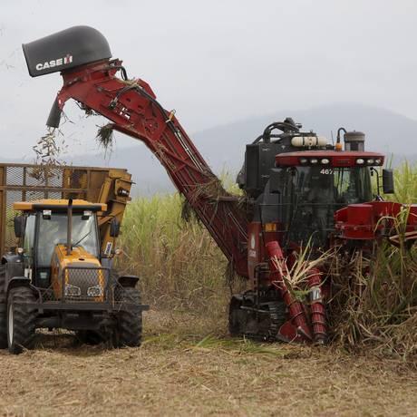 Colheita de cana-de-açúcar no Norte Fluminense Foto: Felipe Hanower / O Globo/11-11-2013