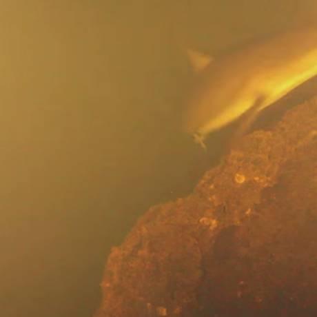 Pesquisadores encontraram duas espécies de tubarão vivendo dentro de cratera vulcânica Foto: REPRODUÇÃO/YOUTUBE