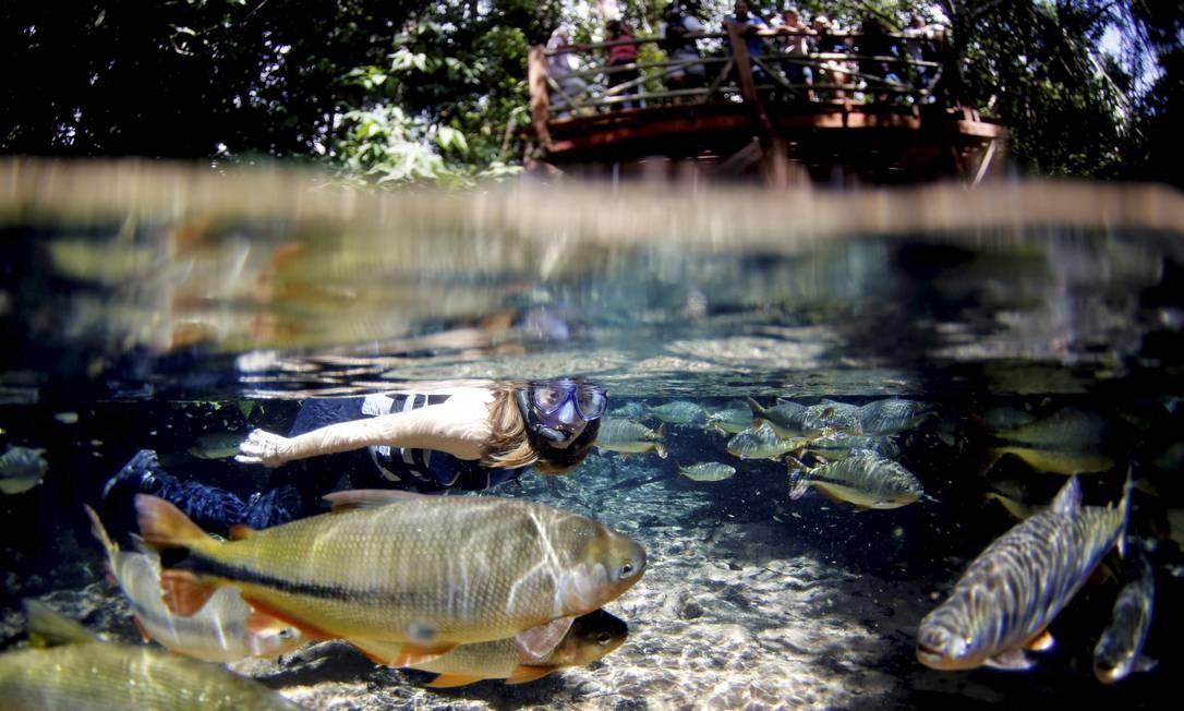 A limpidez da água permite a observação de peixes Foto: Marcelo Piu / Agência O Globo