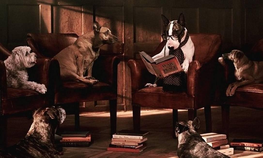Neville Jacobs, o cachorro de Marc Jacobs, está na nova campanha da livraria do estilista americano. O cão foi fotografado por David Sims e o styling ficou por conta de Katie Grand Foto: Reprodução/ Instagram