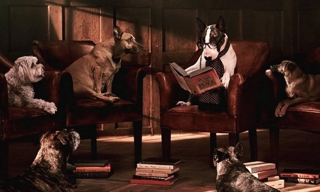 Neville Jacobs, o cachorro de Marc Jacobs, está na nova campanha da livraria do estilista americano. O cão foi fotografado por David Sims e o styling ficou por conta de Katie Grand Reprodução/ Instagram