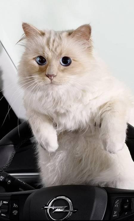 Choupette Lagerfeld, a gatinha cheia de vontades de Karl Lagerfeld, estilista das grifes Chanel e Fendi,é a representante mais célebre da lista. O bichano tem duas empregadas, sua própria conta no Instagram e um livro para chamar de seu. Não bastasse, ela também é dona de uma fortuna. De acordo com o próprio Karl, Choupette ganhou 2.172.625 milhões de libras em 2014. E olha que o felino só fez dois grandes trabalhos: um de beleza para a Shu Uemura e um calendário para o Vauxhall Corsa Foto: Divulgação